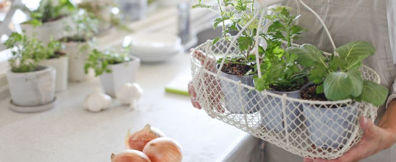 The best vegetables to plant in spring