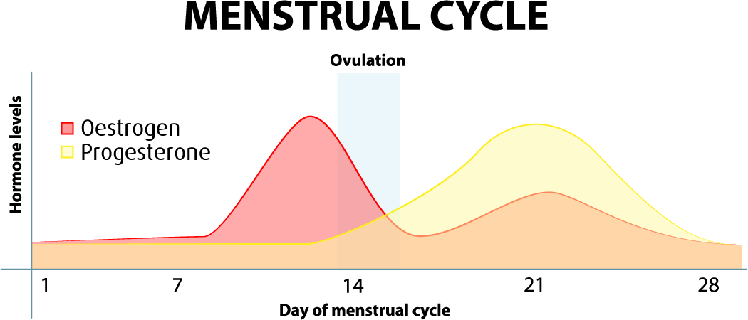Can the menstrual cycle affect IBS?