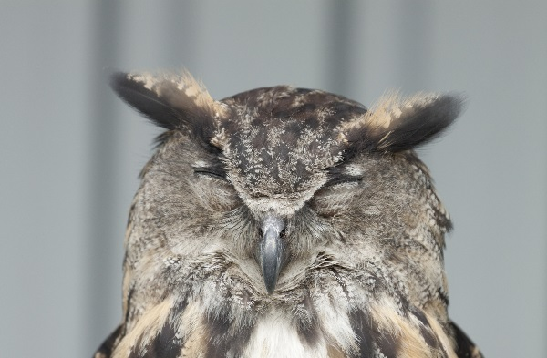 Teen Night Owls Struggle To Learn And >> The Differences Between Night Owls And Morning Larks