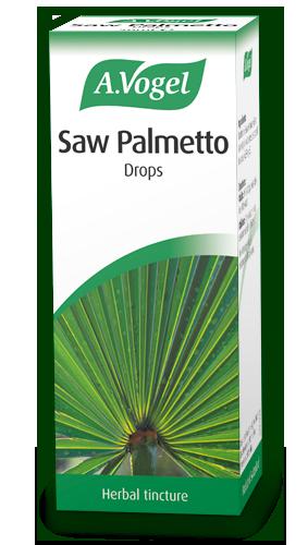 MyPalmShopnl  Sabal palmettoPalmetto palm